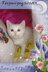 необычные белые коттяа от као мани и рагамаффина