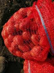 Продам посевной картофель первой репродукции.