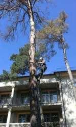 Спил деревьев в Киеве любой сложности