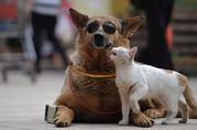 Отправка животных в любую часть Европы